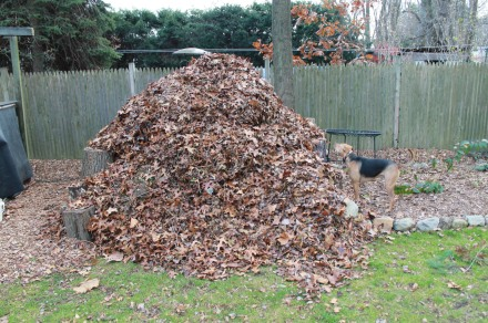 A freshly topped pile after a day of yard cleanup. It will soon breathe out and settle back into itself, soon to be ready to receive more.