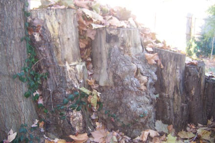 The side wall of my pile, made of logs from an old willow.