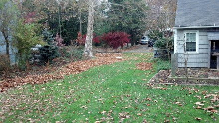 By mid-November, the big trees have shed their leaves, while other parts of the yard hang in there.