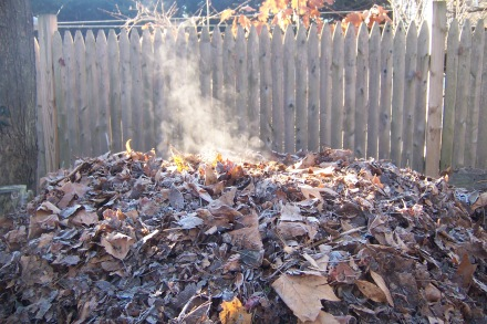 Proof that my multi-layered approach pays off; steam rising from the depths of my pile in late fall.