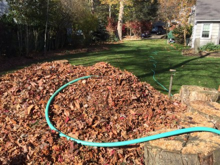 A good compost pile is a mix of green and brown organic matter, air, and water. Here, I give my pile a drink after a fall-leave cleanup in early November.