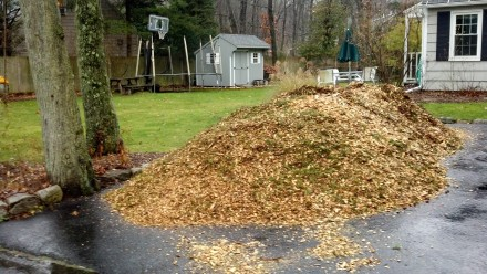 A freshly dumped load of wood chips nearly fills my driveway.