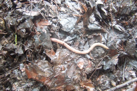 Charles Darwin knew that earthworms were the real movers & shakers.