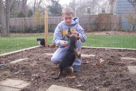 Cole and Miller as a pup in our vegetable garden in December 2011. Tuffy the cat observes.