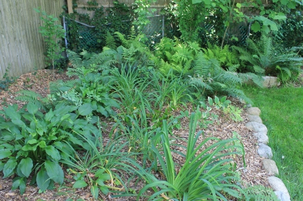 The shade garden in the back corner of the yard, next to my pile. In a few weeks, the hostas will be deer dinner.