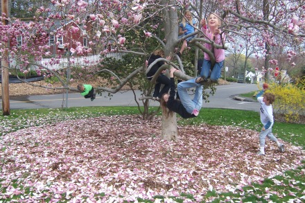 A playdate in the tulip magnolia, in its final years.