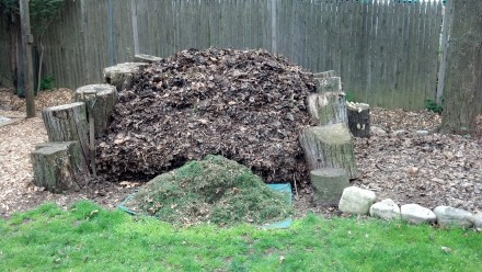Something borrowed, something green: My neighbor Craig's grass clippings, to be added to the top of my pile.
