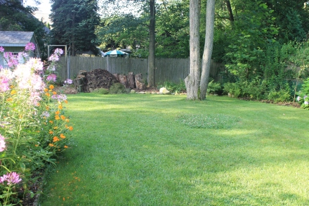My backyard after a mid-summer mow. I've kept one patch of clover in the middle of the lawn.