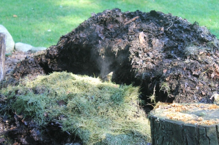 Steam vapor rises from the void. In this hole goes the maple seedlings that bedevil my gardening.
