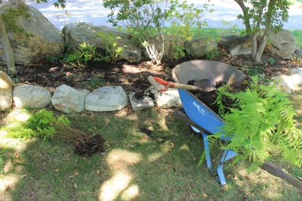 Ferns culled from a now-sunnier spot in my perennial beds will do well in this rock-lined shade garden.