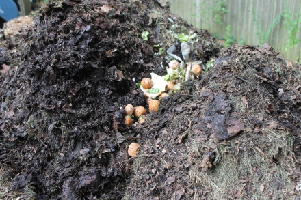 The kitchen scraps, including the stale donut holes, go into a trench in the middle of my pile.