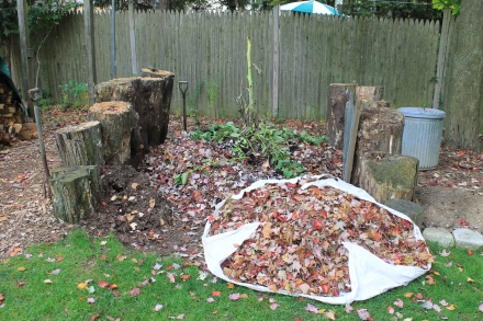 The first load of fall leaves waiting to be added to the beginnings of my pile -- cause for celebration!