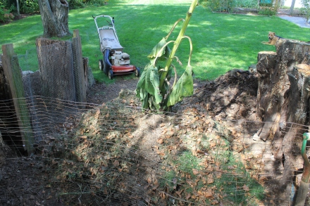 I'm starting my pile off with a base of chopped up grass clippings and leaves.
