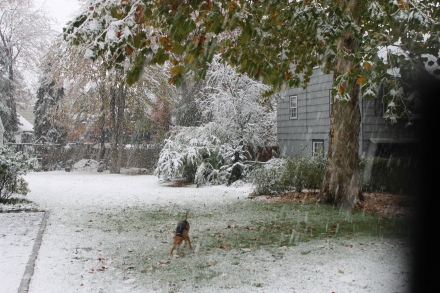 An unexpected snow storm snaps leaf-laden branches and surprises all, even the dog.