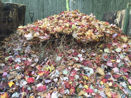 My pile in mid October, a mix of fresh whole leaves, dead-headed stalks and stems and other gleanings from the yard and kitchen.