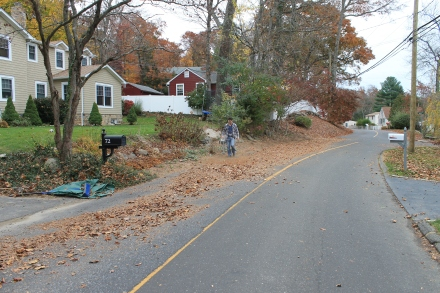 My neighbor Craig, mulching his crop of leaves into a thick windrow of mulched leaf litter.