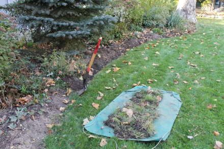 Preparing the garden beds for a fresh covering of mulched wood chips and leaves by re-establishing the border between flowers and grass.