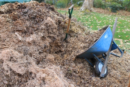 Digging into the massive wood-chip mulch pile, which I'm relieved to find is actually a fluffy mix of leaves and shredded sawdust and sycamore balls.