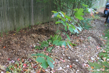 The small culvert that runs along the back fence becomes the repository for much of the chips, which will soon decompose in the shady, damp environs.