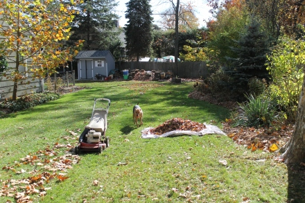 I use the mower to mulch the leaves on the lawn and drag the shreddings over to my pile.