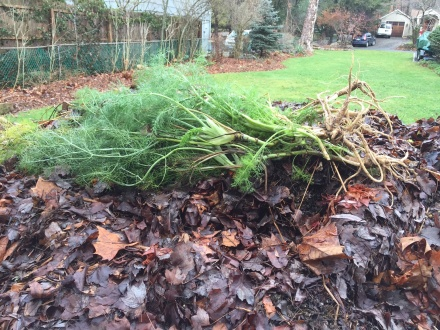 Fragrant shocks of fennel from the garden help my pile ring out the old year. I'll cover the fresh green with a layer of soggy leaves.