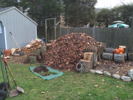 Some of the busyness involved in chopping wood and shoring up my pile. Plus, old pumpkins from the neighbors...