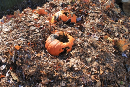 Jack o' Lanterns get tossed into my pile each fall.
