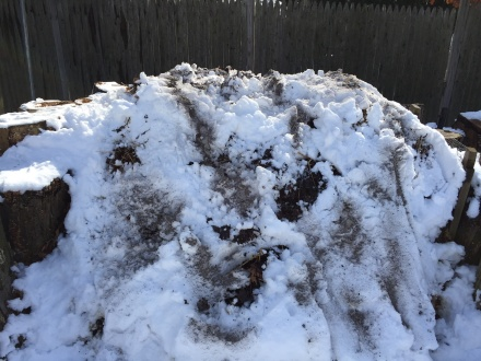 A smattering of ashes on my pile, tussled with melting snow.
