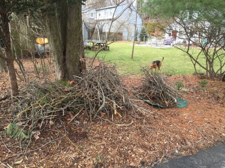The trees in my backyard shed branches throughout the year. Some is burned as kindling, but most get hauled off to the yard-waste dump.