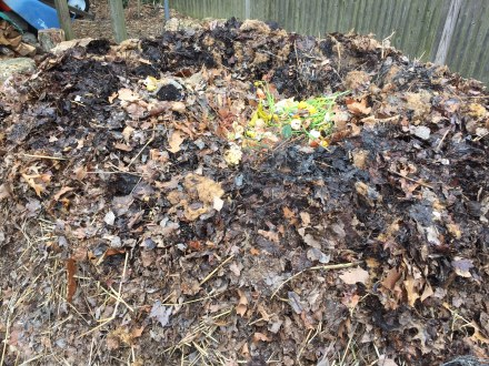 Adding a fulsome amount of food scraps and gleanings from the yard to my pile, on the first day of spring.
