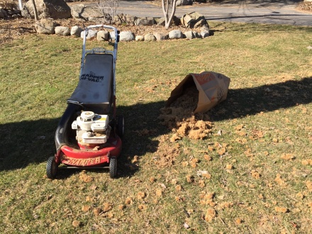 I haul out the mower for a late-winter gathering of the seedballs that fall across the lawn in the shadow of the sycamore tree.
