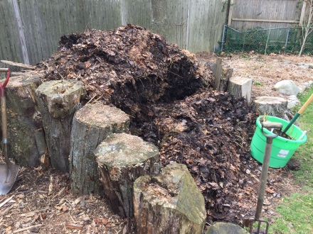 I backfill the trench I've made in my pile with a fresh batch of seaweed and bury it deeply with leaf mold scraped from the top.