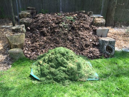 Fresh fodder for my pile -- the gathering of grass clippings from a fast-growing lawn.