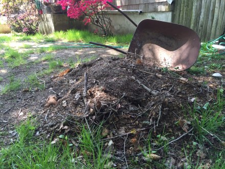 Unwanted in my neighbor's yard, this mound of old spruce needles and dirt will meld with fresh grass clippings in my pile.